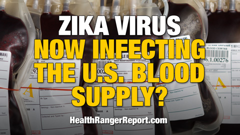 Zika-Virus-Infecting-US-Blood-Supply-480